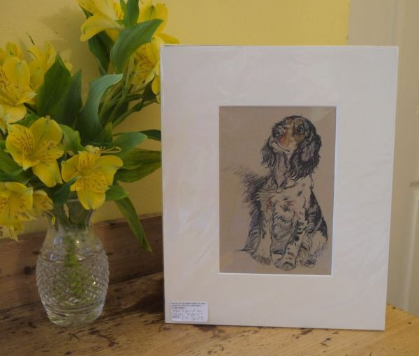 Coloured Spaniel sitting  1930's print by Cecil Aldin - Sp A8